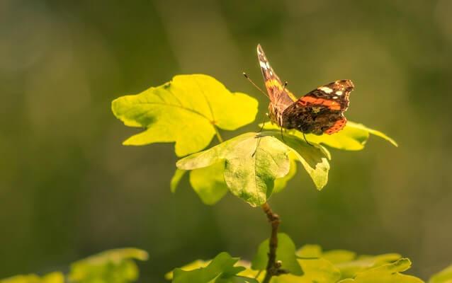 Meditationsbild Schmetterling auf dem Blatt